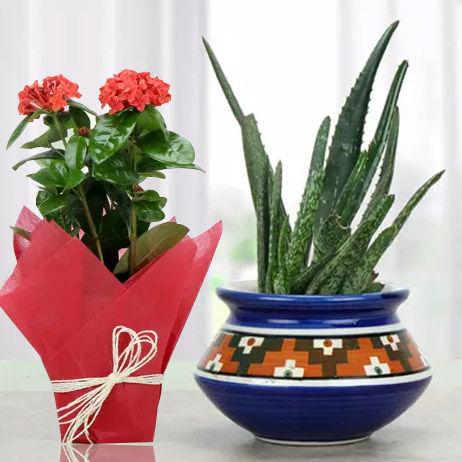 Outdoor Plants Dubai