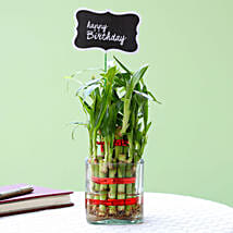 2 Layer Bamboo Plant For Happy Birthday: Spiritual Plant