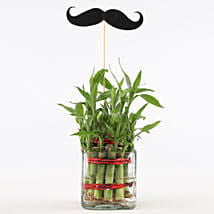 2 Layer Bamboo Plant With Mustache: Send Plants For Fathers Day