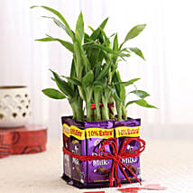 2 Layer Lucky Bamboo With Dairy Milk Chocolates: Send Plants to Delhi