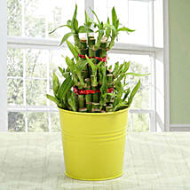 3 layer lucky bamboo Plant: Send Lucky Bamboo to Gurgaon
