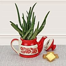 Aloe Vera in Kettle: Send Home Decor Gifts for Him