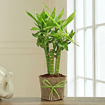 Bamboo Plant Decor: Send Lucky Bamboo for Birthday