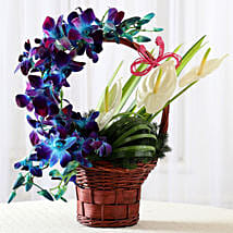 Basket of Purple Orchids & Anthuriums: Mothers Day Flowers