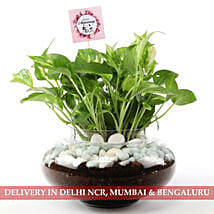 Beautiful Scindapsus Plant For Anniversary: Send Plants to Delhi