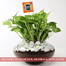 Beautiful Scindapsus Plant For Birthday: Send Plants to Delhi
