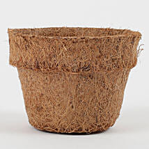 Bio Degradable Coconut Husk Pot Mini: Pots and Planters