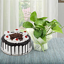 Black Forest Cake With Money Plant: Money Plant