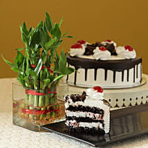 Blackforest Cake N Two Layer Bamboo Plant: Plants for birthday