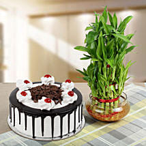 Blackforest Cake With Three Layer Bamboo Plant: Send Plants for Birthday
