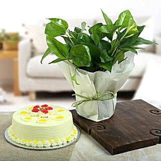 Butterscotch Cake N Lucky Money Plant: Money Plant
