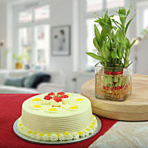 Butterscotch Cake With Bamboo Plant: Send Plants for Anniversary