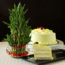Butterscotch Cake With Three Layer Bamboo Plant: Lucky Bamboo for Teachers Day