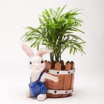 Chamaedorea Plant in Resin Rabbit Pot: Pots for Plants