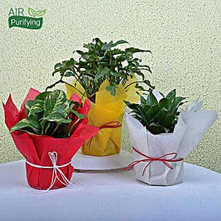 Enjoy Life House Plants: