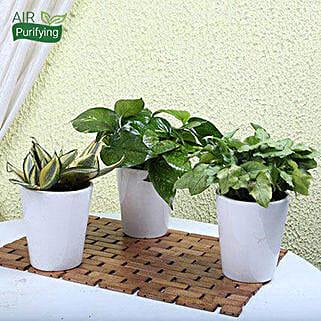 Exotic House Plants: Plant Combos