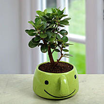 Ficus Dwarf In Smiley Vase:
