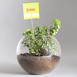 Friends Forever Jade Plant Terrarium: Good Luck Plants - Friendship Day