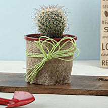 Furry Echinocactus Plant: Plant Gifts for Girlfriend