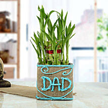 Good Luck Bamboo Plant for Dad: Gifts for Grandfather