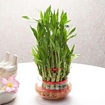 Good Luck Three Layer Bamboo Plant: Friendship Day Gifts- Same Day