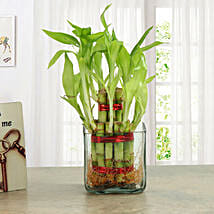 Good Luck Two Layer Bamboo Plant: Send Personalised Photo Frames - Rakhi