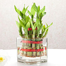 Good Luck Two Layer Bamboo Plant: Gifts for Grandparents