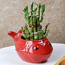 Gorgeous Lucky Bamboo Plant: Lucky Bamboo for Rakhi