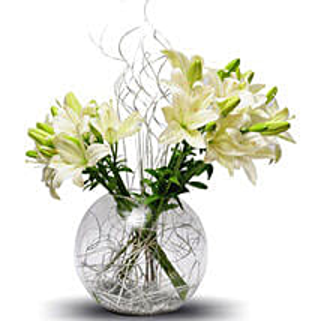 Lily celebration: Sympathy N Funeral