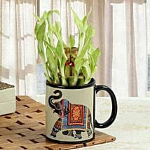 Luck In Mug: Send Lucky Bamboo for Diwali