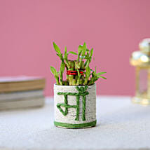 Lucky Bamboo Plant to Mom: Mother's Day Plants