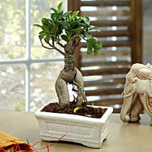 Marvellous Bonsai Plant: Home Decor to Noida