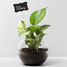 Money Plant Terrarium For Birthday: Spiritual and Vastu Plants