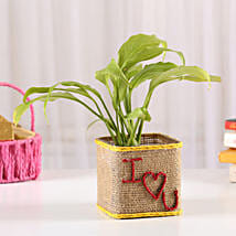Peace Lily In I Love You Vase: Propose Day Gifts