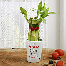 Personalized Love Bamboo: Exotic Plants