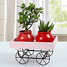 Plants In A Trolley: Good Luck Plants for Diwali