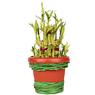 Pot Of Luck: Send Lucky Bamboo for Him