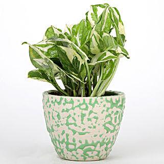 Pothos Plant In Green Artsy Ceramic Pot: Buy Indoor Plants