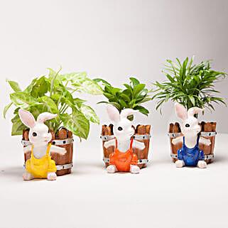 Set of 3 Green Plants in Resin Pots: