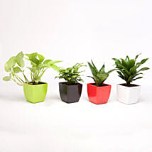 Set Of 4 Lush Green Foliage Plants: Air Purifying Plants