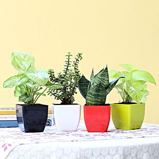 Set Of 4 Lush Green Foliage Plants: Indoor Plants