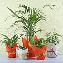 Set of 5 Exotic Green Plants: Send Shrubs