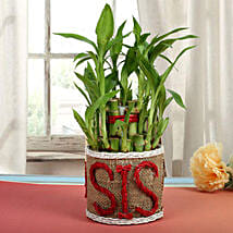 Special Bamboo In Jute Vase: Return Gifts for Sister