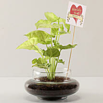 Syngonium Plant For Best Wife: Send Plants to Bangalore