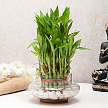 Three Layer Bamboo Good Luck Terrarium: Plants to Delhi