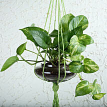 Thriving Money Plant Terrarium: Money Tree