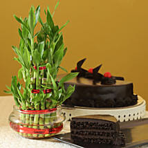 Truffle Cake N Three Layer Bamboo Plant: Mother's Day Plants