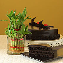 Truffle Cake N Two Layer Bamboo Plant: Lucky Bamboo for Diwali