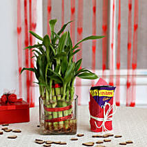 Two Layer Bamboo Plant & Cadbury Dairy Milk Chocolates: Send Plants for Valentines Day