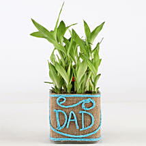 Two Layer Lucky Bamboo Plant For Dad: Lucky Bamboo Plants